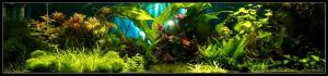 gallery_6735_228_11284.jpg
