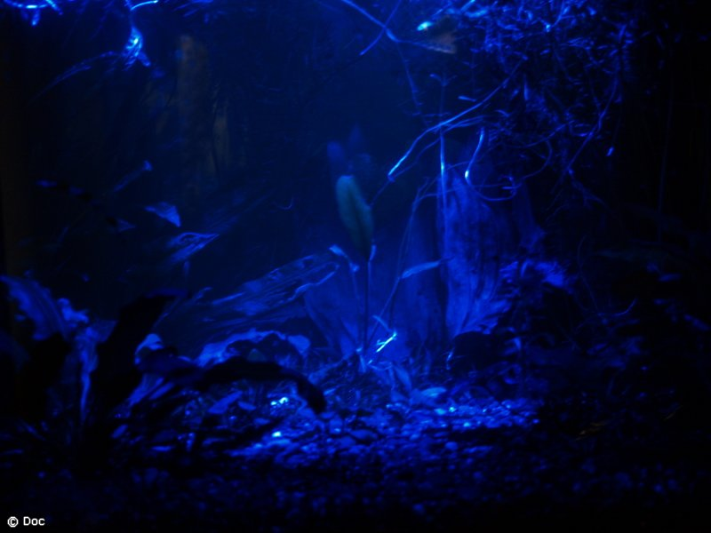 ночная ловля с подсветкой