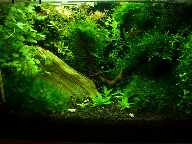 gallery_8052_706_81643.jpg