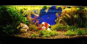 gallery_17056_1027_47644.jpg