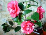 tn_gallery_16155_1026_108717.jpg
