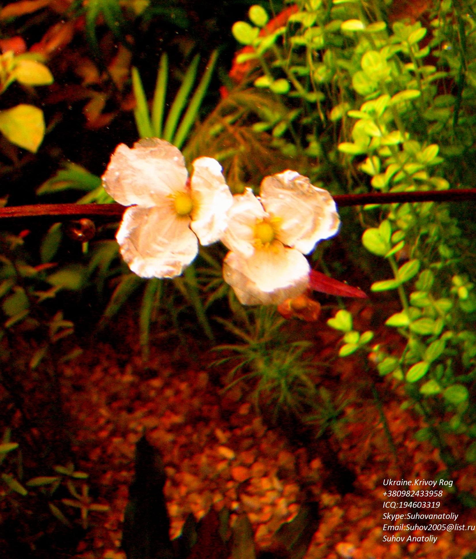 gallery_11723_1289_193224.jpg