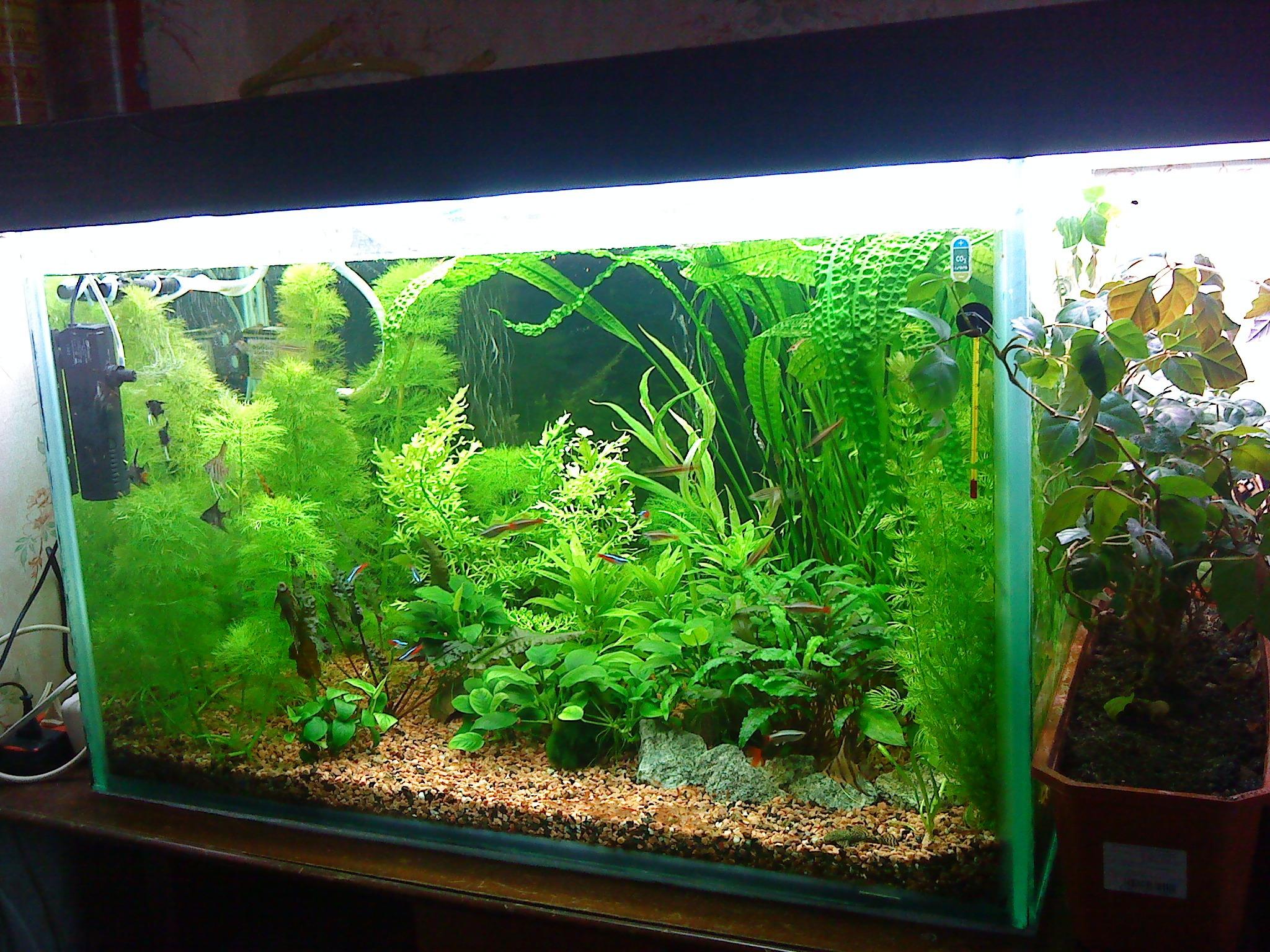 Посадка растений аквариум, правильная посадка аквариумных 20