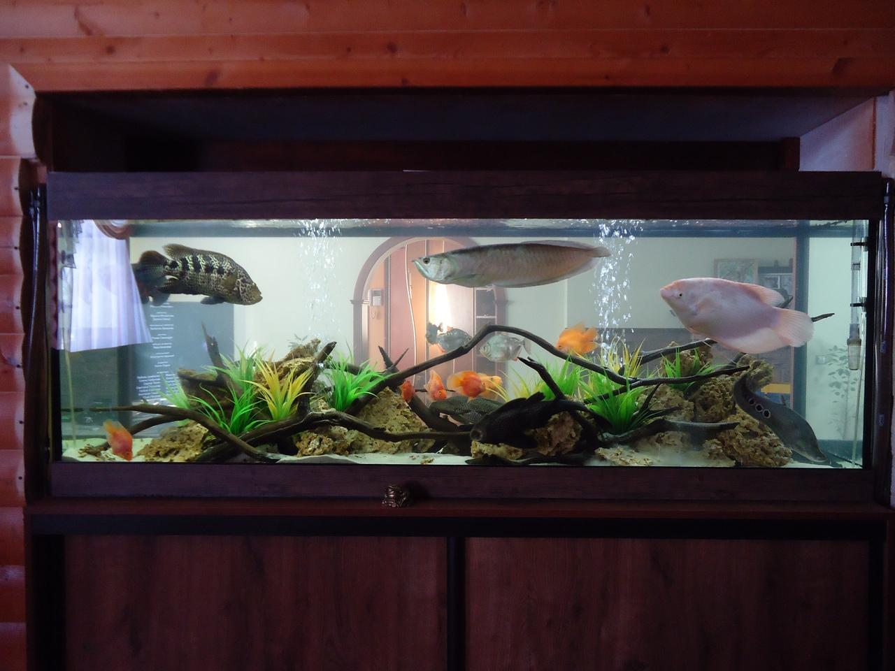 Как сделать аквариум своими руками из стекла: пошаговая инструкция 969
