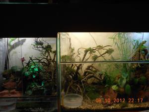 gallery_32071_2167_182490.jpg