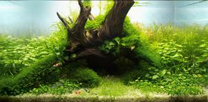 gallery_15618_2401_808187.jpg