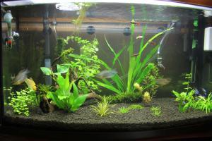 Когда можно сажать растения в аквариум 521