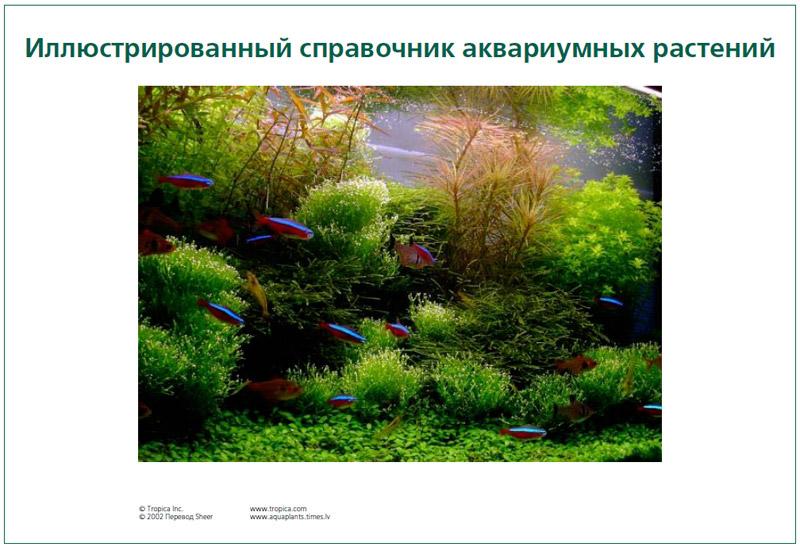 Книга аквариумные растения скачать