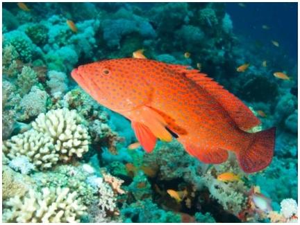 Рыбы умеют обмениваться информацией