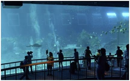 Крупнейший в мире публичный аквариум открылся в Сингапуре