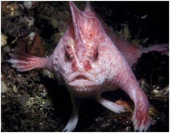Найдена бегающая по дну рыба