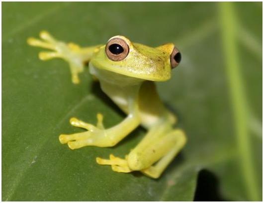 Террариум как «ковчег» для редких исчезающих видов