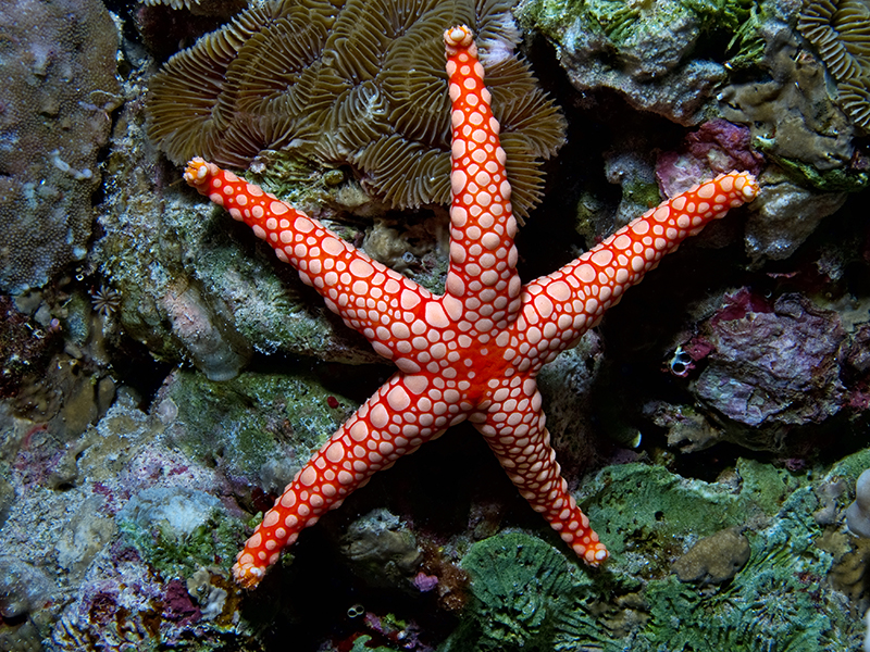 Морская звезда - королева подводного царства