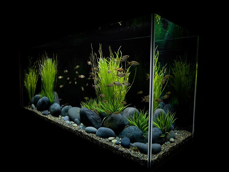 Дизайн аквариума книга скачать