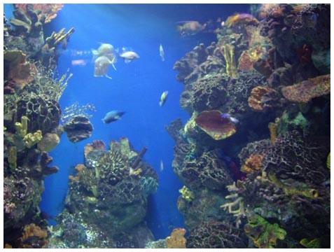 Место в аквариуме испанской барселоны