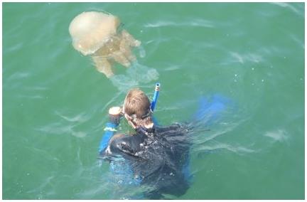 Медузы являются активными хищниками