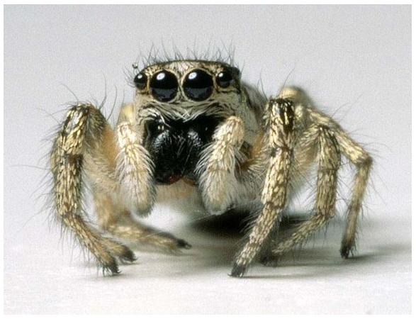 Если вы уже делаете террариум для паука своими руками, то эта статья однозначно вам.  5. 4. 3. 2. 1.