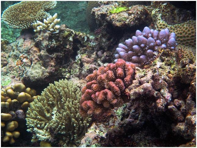 Водоросли и кораллы – скрытые нюансы взаимоотношений