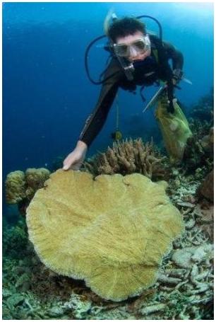 На Semporna обнаружено самое богатое биоразнообразие морской жизни