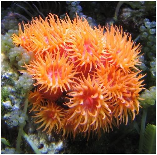 Роль мягких кораллов в жизни рифов оказалась огромной