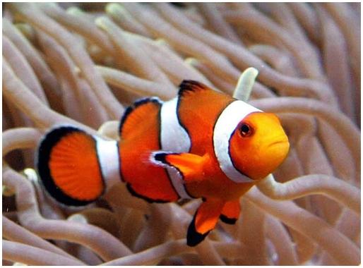 В поисках немо виды рыб фильм с джеки чаном кулак к кулаку