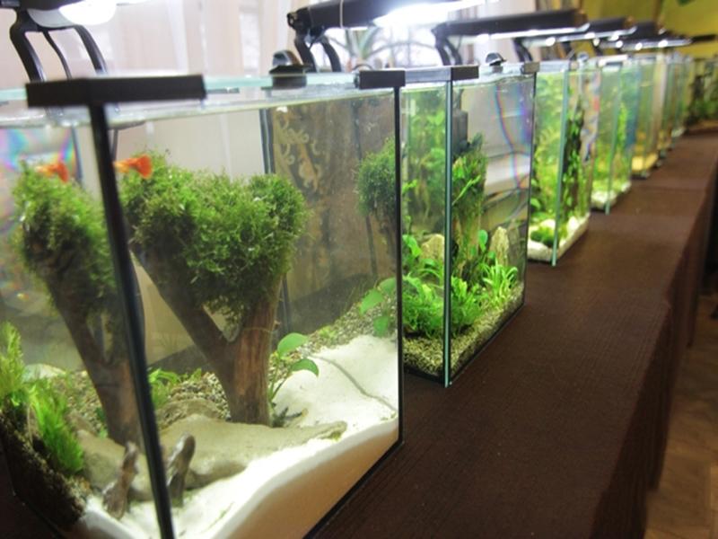 Выставка нано аквариумов ждет своего героя
