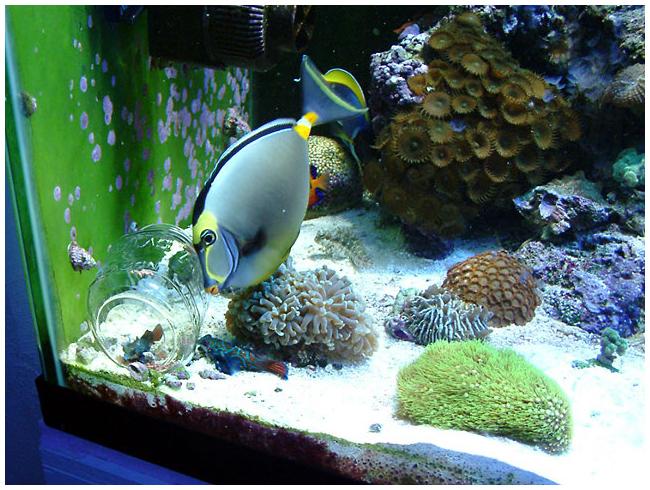 Донная кормушка в аквариум