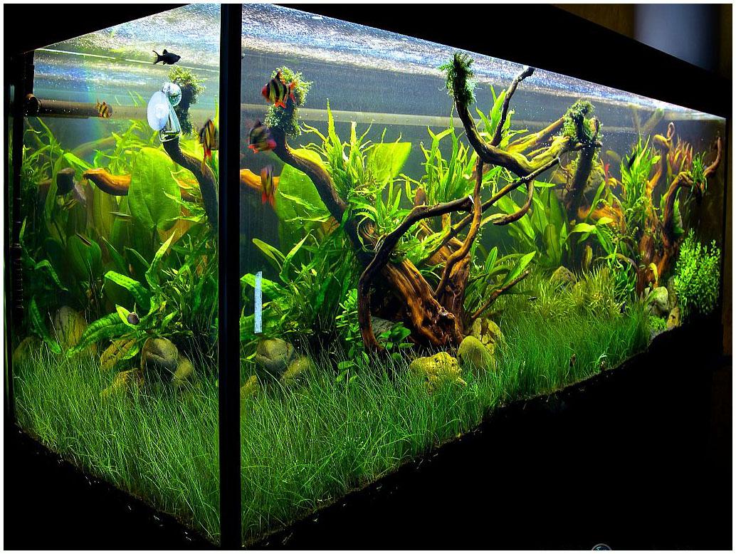 Как украсить аквариум своими руками 82