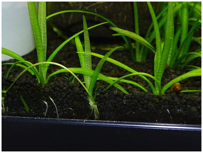 Земля в аквариуме Вопрос: нужно ли как то подготавливать земельную массу?