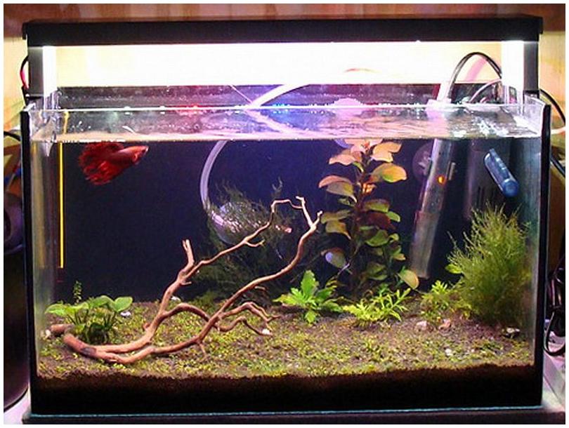 Как сделать подсветку для аквариум 303
