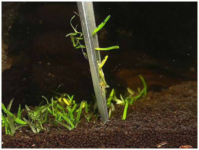 Можно ли сажать аквариумные растения в обычную землю универсальную 60