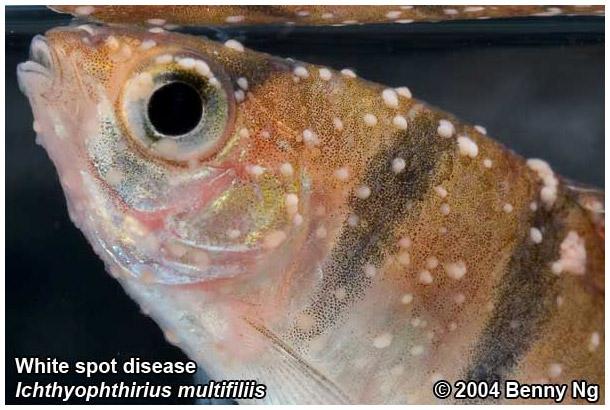 Re: Болезни рыб.