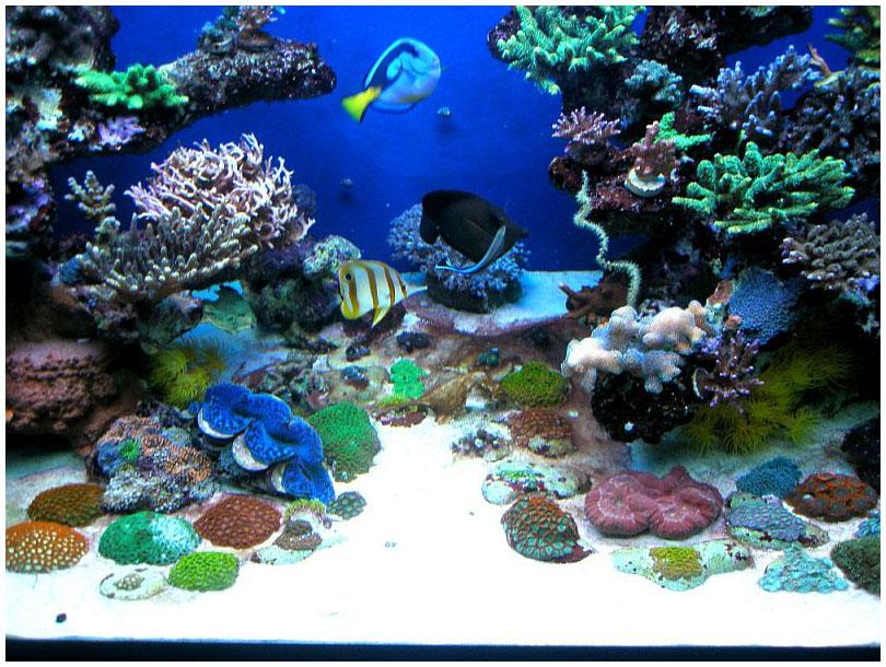 Как выбрать светильник для морского аквариума