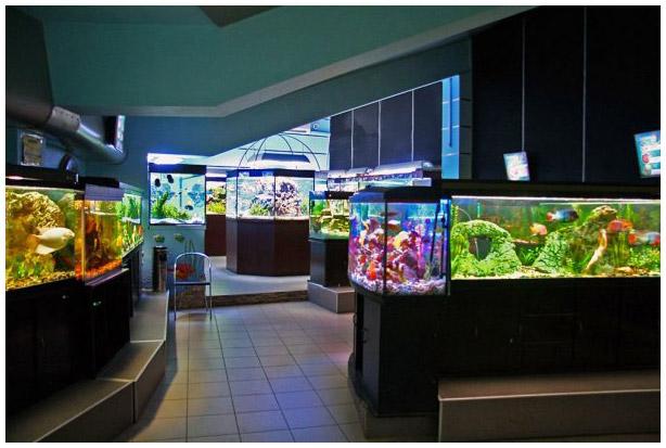 Набатов, а комнатный пресноводный аквариум и его население