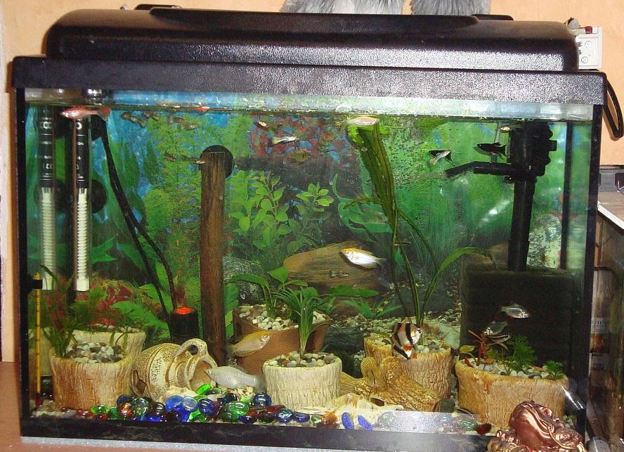 Декор аквариумов своими руками