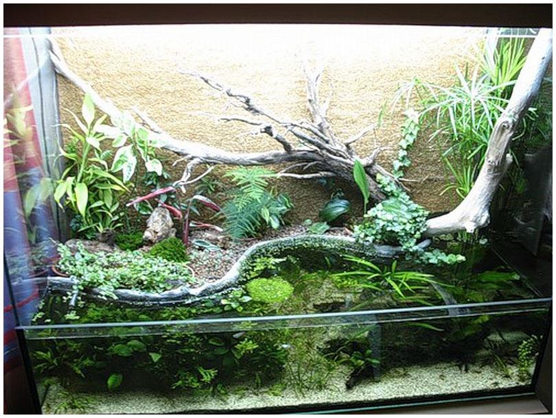 Картинки акватеррариумов