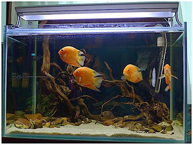 Фитофильтр для аквариума своими руками. Пошаговая инструкция