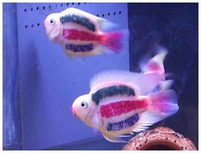 Фото как обустроить аквариум для того чтобы цихлиды лучше себя