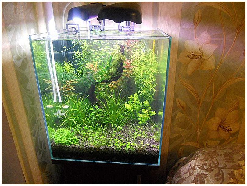Грунт для травника аквариум