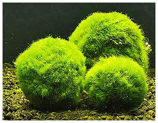 Рослини в акваріумі це простіше ніж