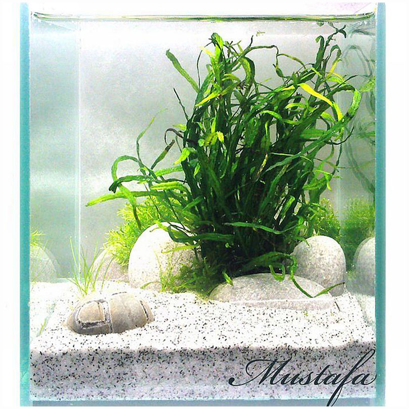 Эрлифт для аквариума