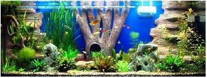 Астраханский форум аквариумистов * Просмотр темы - Объёмный фон