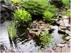 Висадження рослин в штучний ставок.  Декорування водойми і маскування техэлементов.  Установка системи фільтрації.