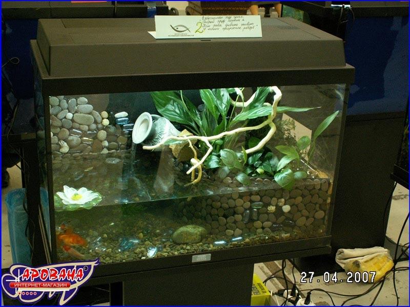 Выставка дизайн аквариум