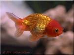 26768. Re: золотая рыбка, исполни мое желание.  10 мес., 4 нед. назад.